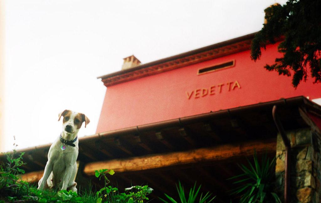 Hund frei im Vedetta Relais Garten in Scarlino