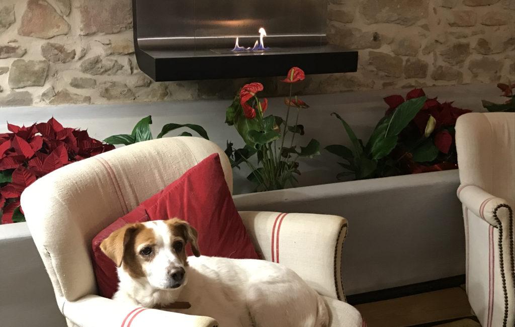 La mia canina Mariuccia rilassata davanti al caminetto