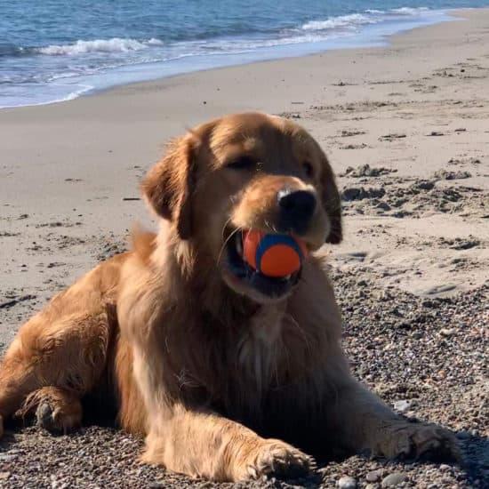Tierefrendlich Strand in der Maremma